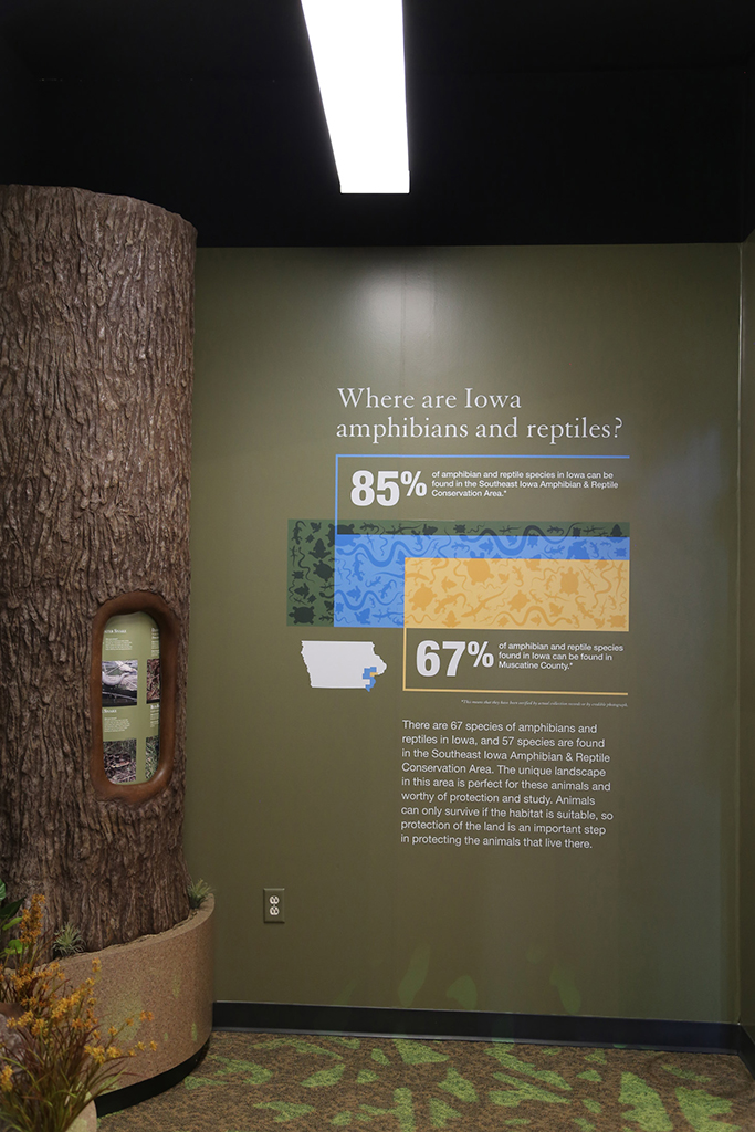 Muscatine County Conservation Museum Amphibians and Reptiles Wall Graphics