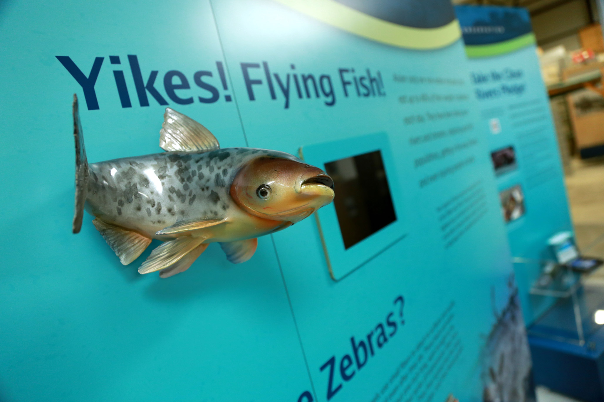 National Mississippi River Museum and Aquarium Flying Fish Display