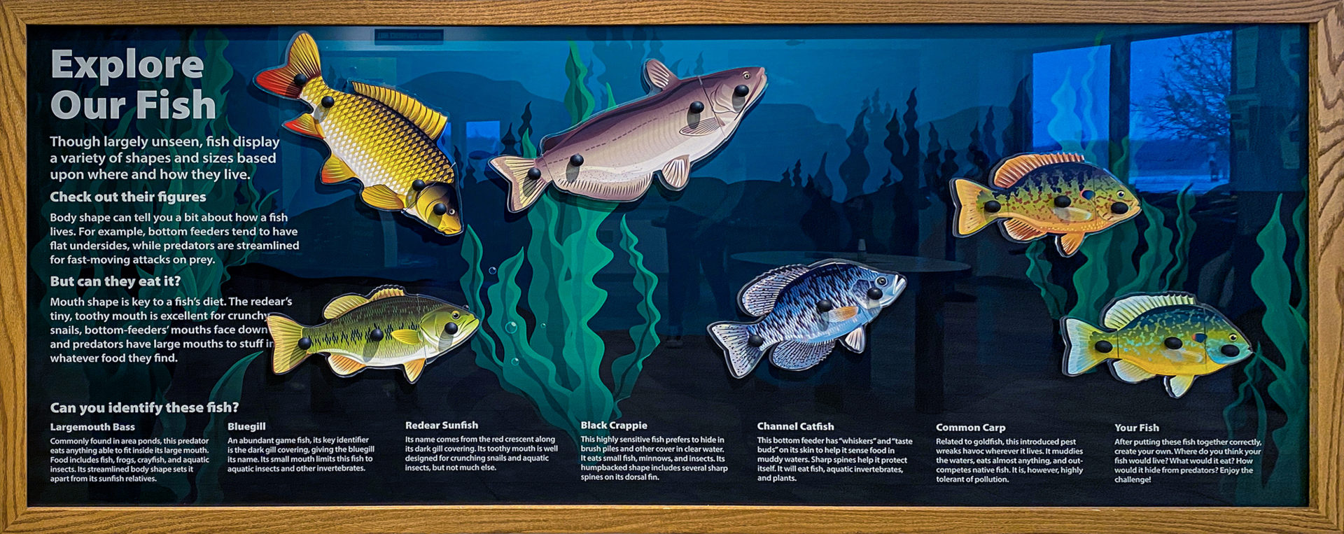 Washington County Conservation Magnetic Fish Interactive Game